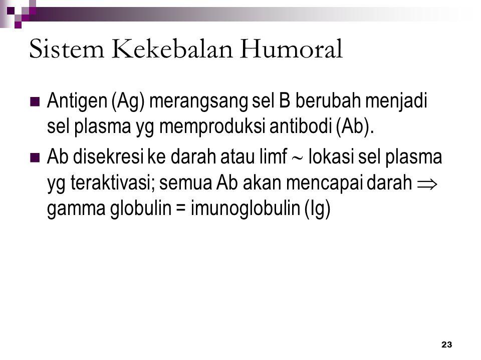 24 Imunoglobulin (Ig) Ada 5 kelas: 1.