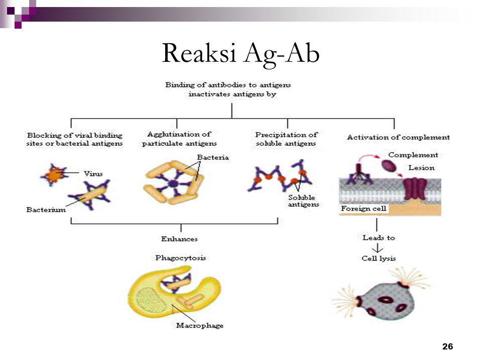 26 Reaksi Ag-Ab