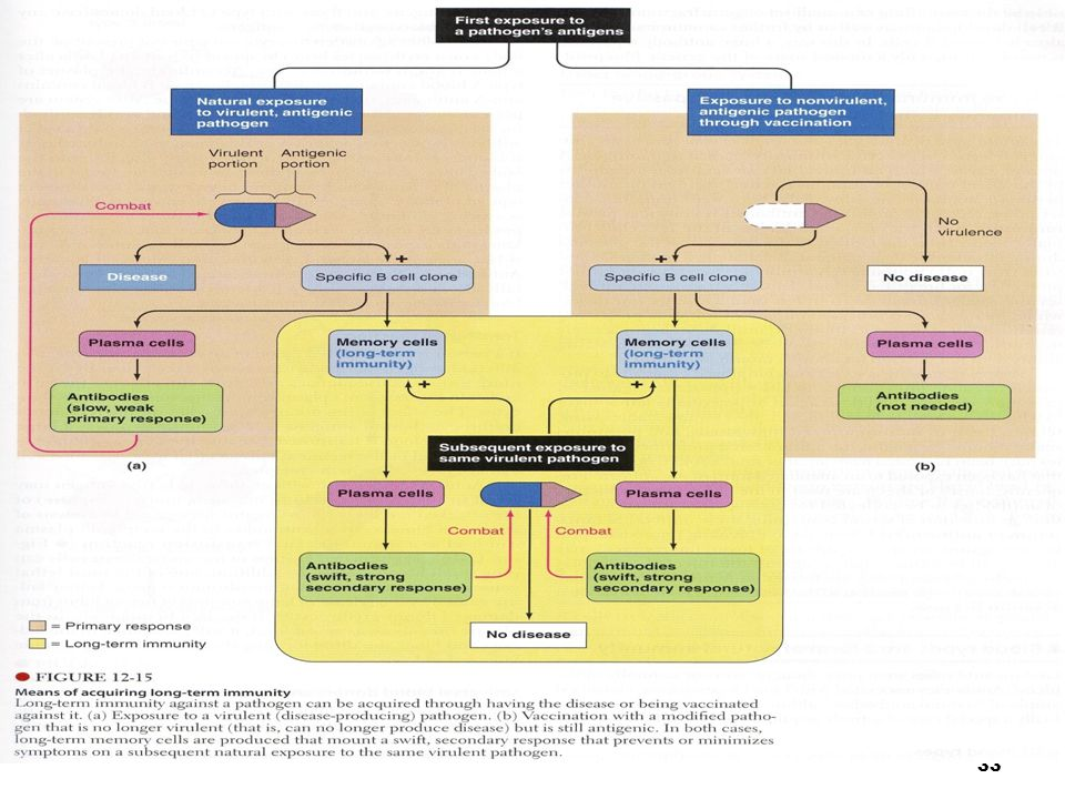 34 Respons Imun thd Invasi Bakteri