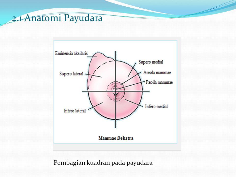 2.1 Anatomi Payudara Pembagian kuadran pada payudara