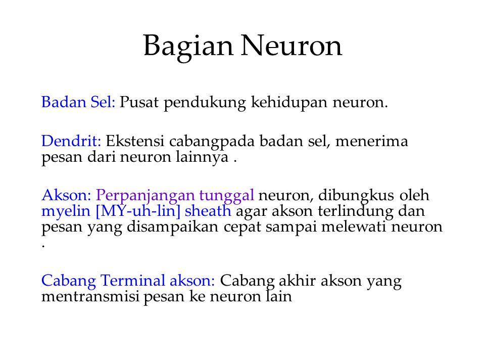 Bagian Neuron Badan Sel: Pusat pendukung kehidupan neuron. Dendrit: Ekstensi cabangpada badan sel, menerima pesan dari neuron lainnya. Akson: Perpanja
