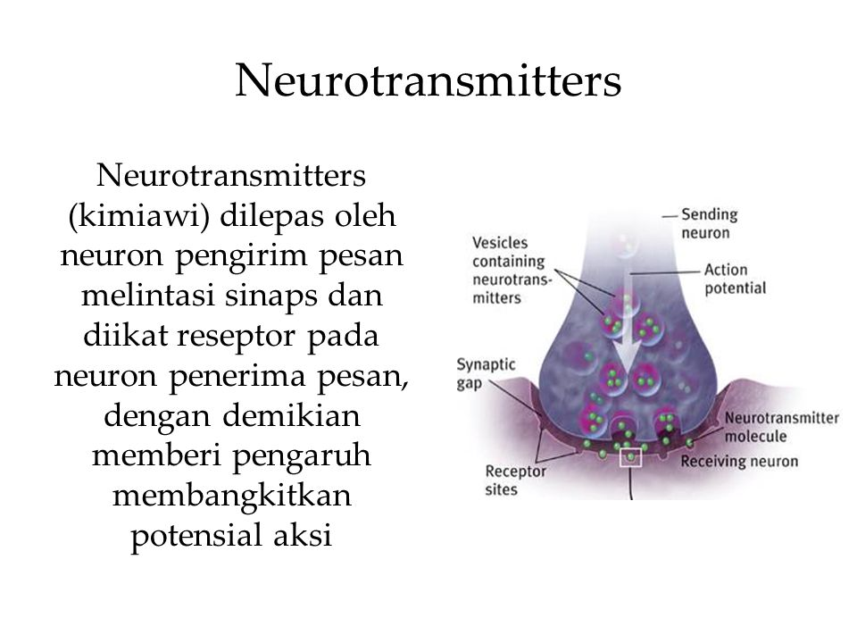 Neurotransmitters Neurotransmitters (kimiawi) dilepas oleh neuron pengirim pesan melintasi sinaps dan diikat reseptor pada neuron penerima pesan, dengan demikian memberi pengaruh membangkitkan potensial aksi
