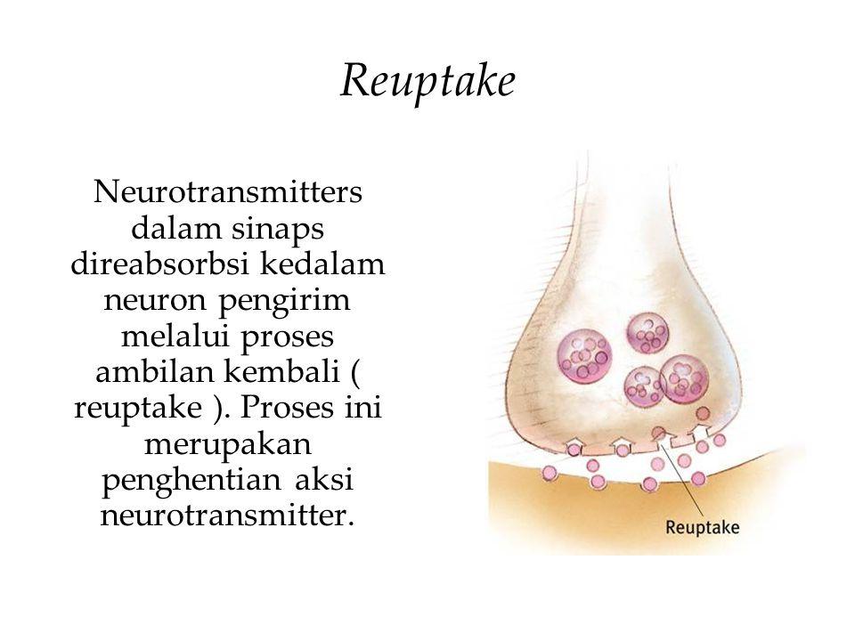 Reuptake Neurotransmitters dalam sinaps direabsorbsi kedalam neuron pengirim melalui proses ambilan kembali ( reuptake ).