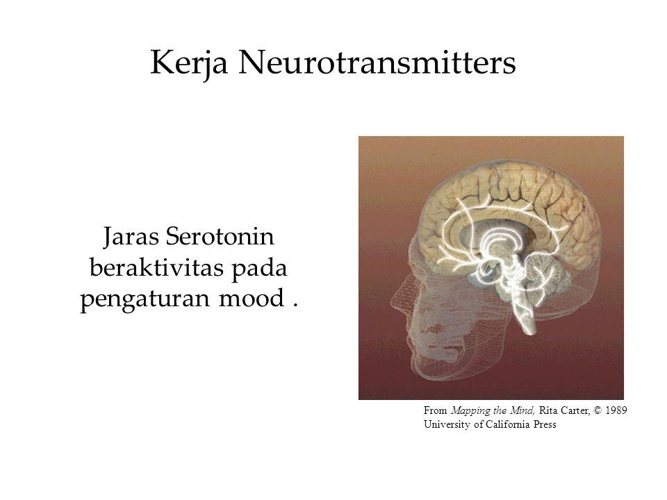 Kerja Neurotransmitters Jaras Serotonin beraktivitas pada pengaturan mood.