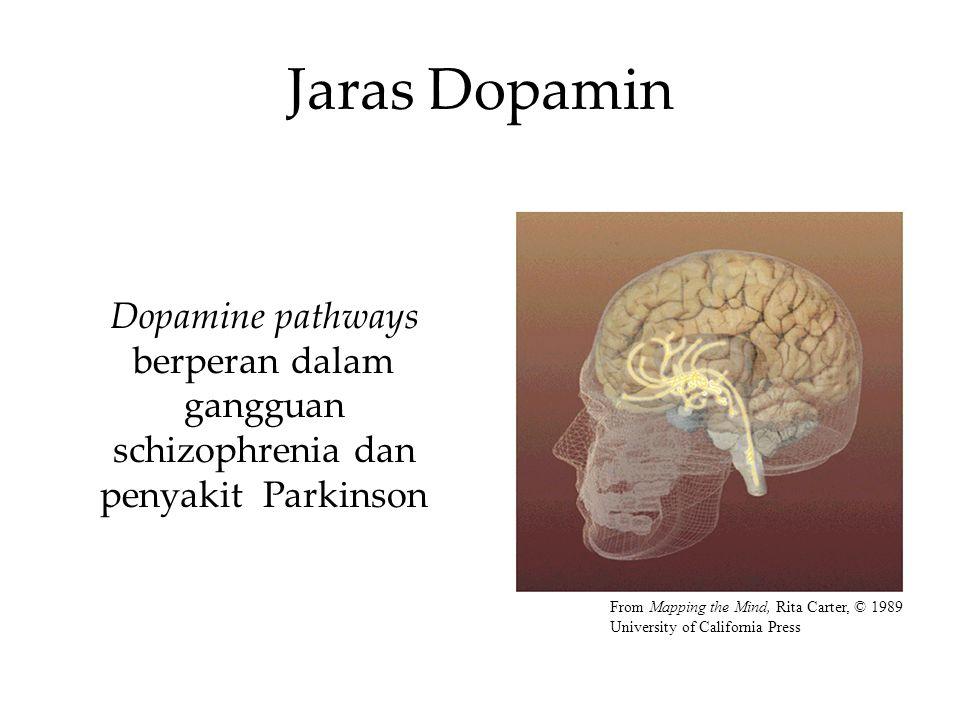 Jaras Dopamin Dopamine pathways berperan dalam gangguan schizophrenia dan penyakit Parkinson From Mapping the Mind, Rita Carter, © 1989 University of