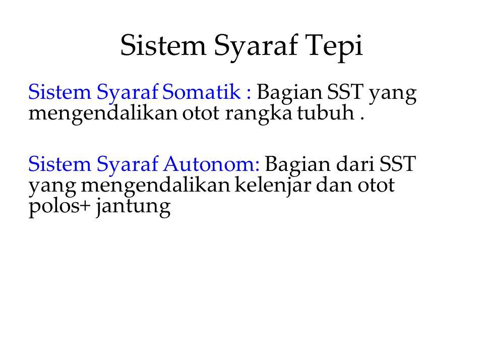Sistem Syaraf Tepi Sistem Syaraf Somatik : Bagian SST yang mengendalikan otot rangka tubuh. Sistem Syaraf Autonom: Bagian dari SST yang mengendalikan