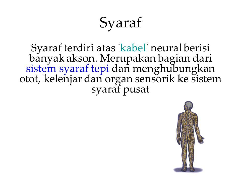 Syaraf Syaraf terdiri atas kabel neural berisi banyak akson.