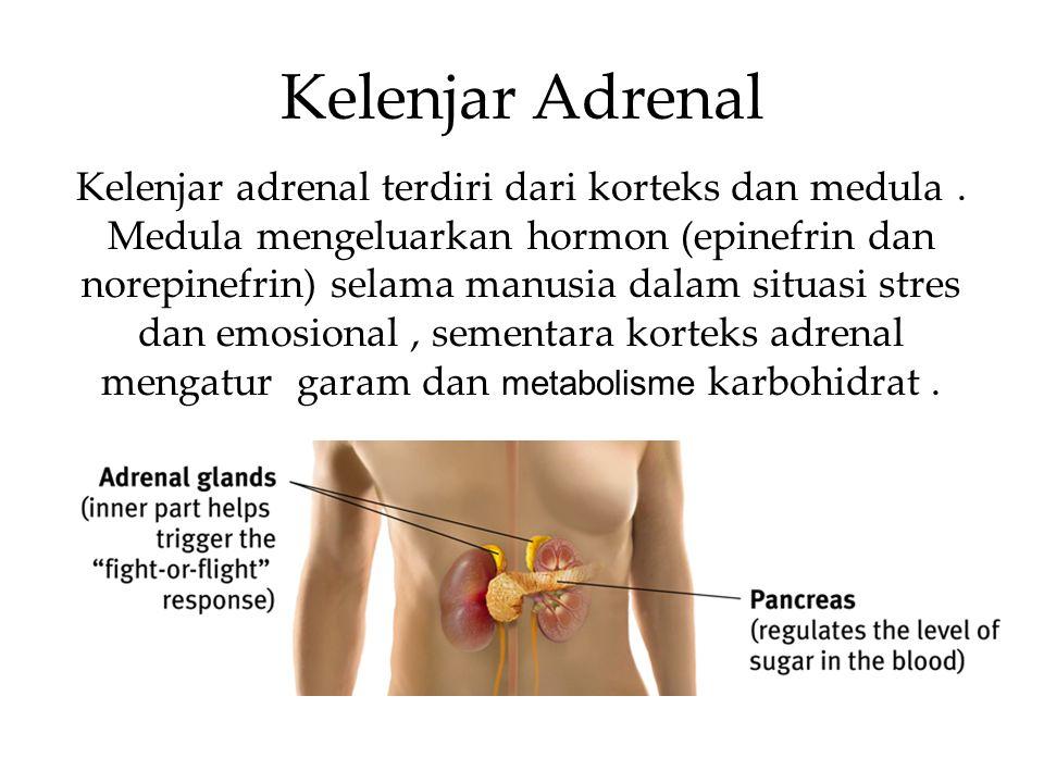 Kelenjar Adrenal Kelenjar adrenal terdiri dari korteks dan medula. Medula mengeluarkan hormon (epinefrin dan norepinefrin) selama manusia dalam situas