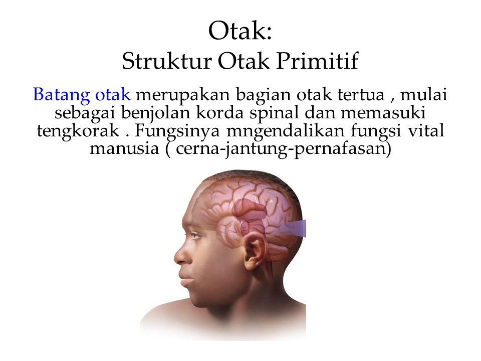 Otak: Struktur Otak Primitif Batang otak merupakan bagian otak tertua, mulai sebagai benjolan korda spinal dan memasuki tengkorak.