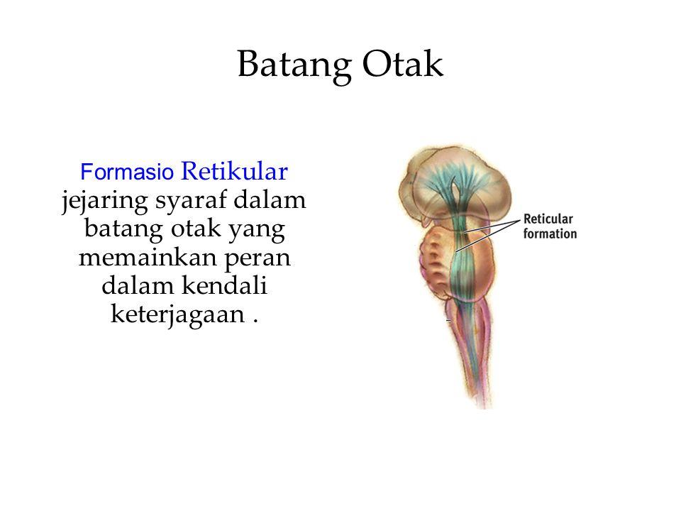 Batang Otak Formasio Retikular jejaring syaraf dalam batang otak yang memainkan peran dalam kendali keterjagaan.