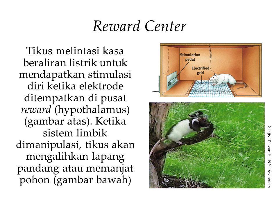Tikus melintasi kasa beraliran listrik untuk mendapatkan stimulasi diri ketika elektrode ditempatkan di pusat reward (hypothalamus) (gambar atas).