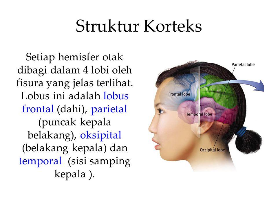 Struktur Korteks Setiap hemisfer otak dibagi dalam 4 lobi oleh fisura yang jelas terlihat.