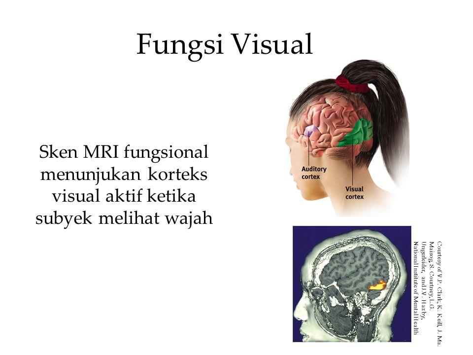 Fungsi Visual Sken MRI fungsional menunjukan korteks visual aktif ketika subyek melihat wajah Courtesy of V.P. Clark, K. Keill, J. Ma. Maisog, S. Cour