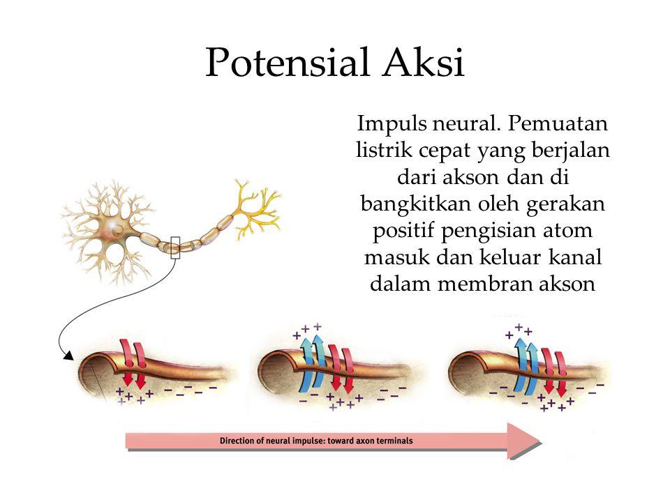 Mekanisme Lock & Key Neurotransmitters diikat reseptor pada neuron penerima dengan mekanisme lubang kunci dan anak kunci.