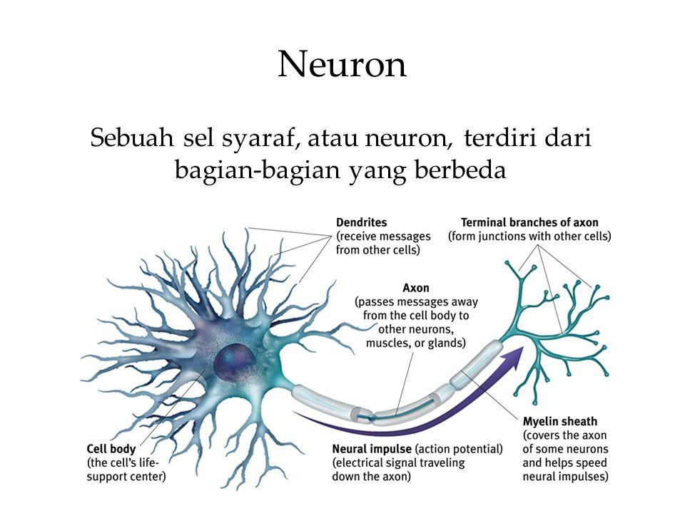 Neuron Sebuah sel syaraf, atau neuron, terdiri dari bagian-bagian yang berbeda