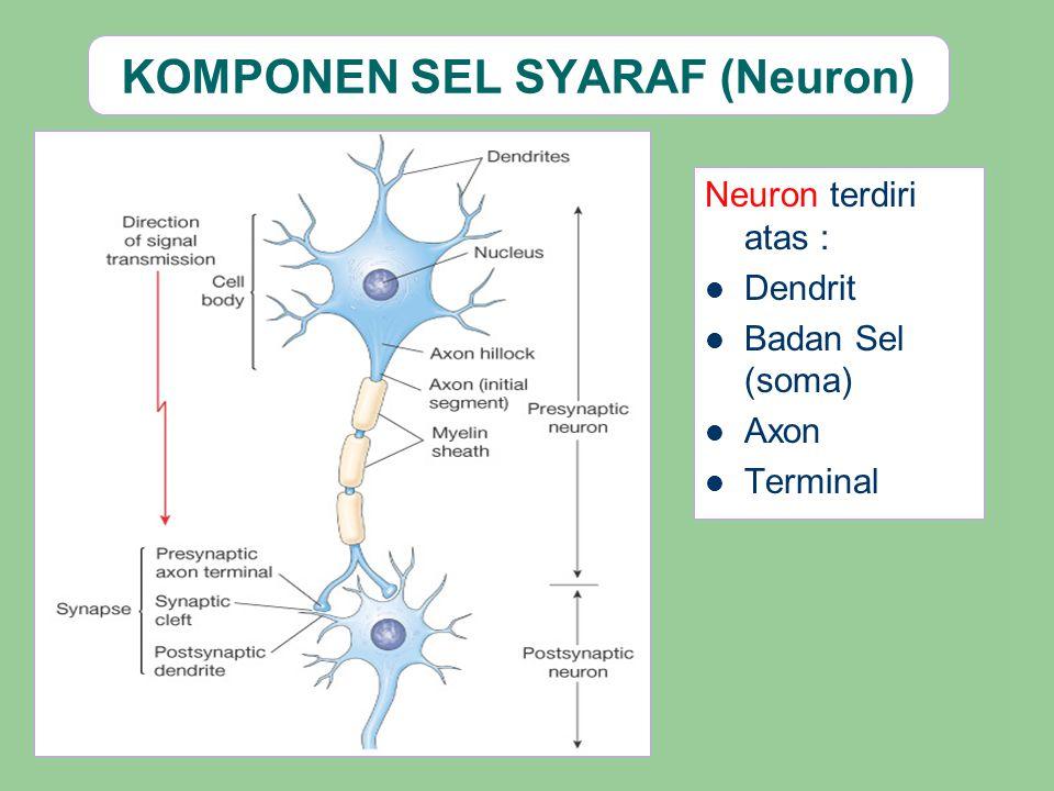 KOMPONEN SEL SYARAF (Neuron) Neuron terdiri atas : Dendrit Badan Sel (soma) Axon Terminal