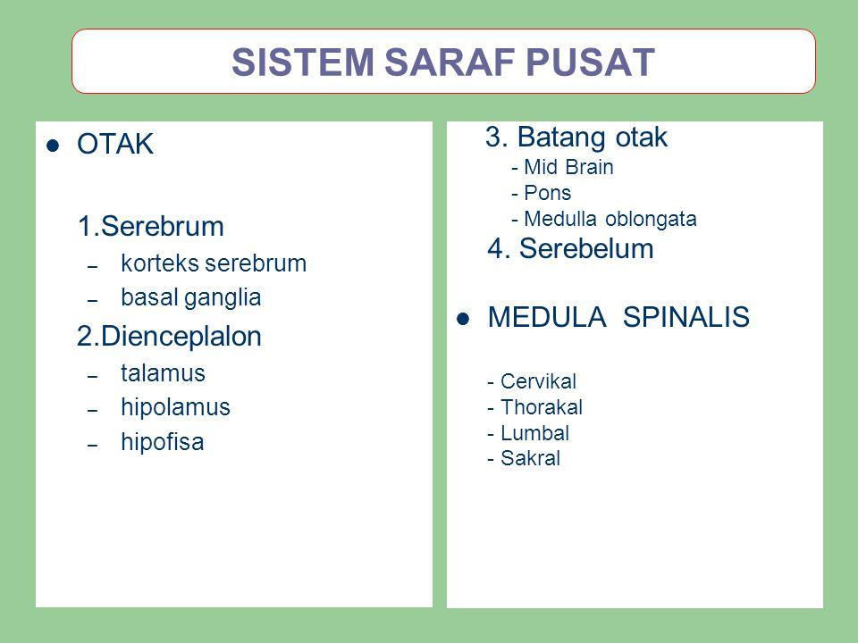 SISTEM SARAF PUSAT OTAK 1.Serebrum – korteks serebrum – basal ganglia 2.Dienceplalon – talamus – hipolamus – hipofisa 3. Batang otak - Mid Brain - Pon