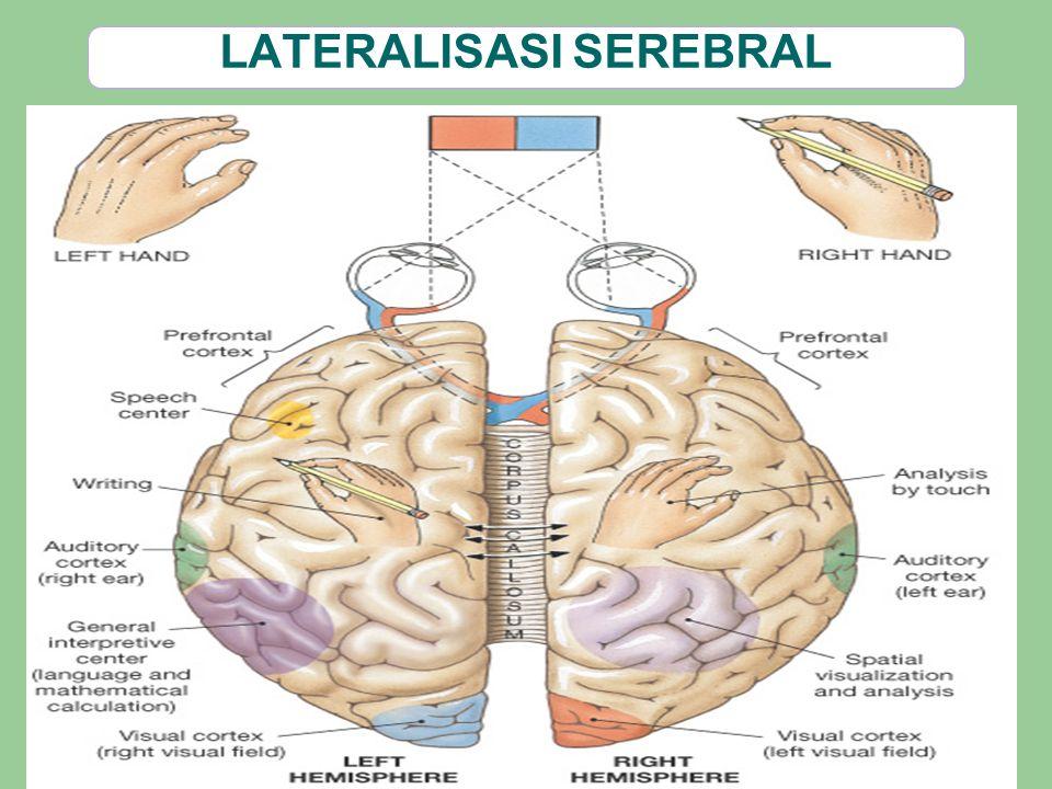 LATERALISASI SEREBRAL