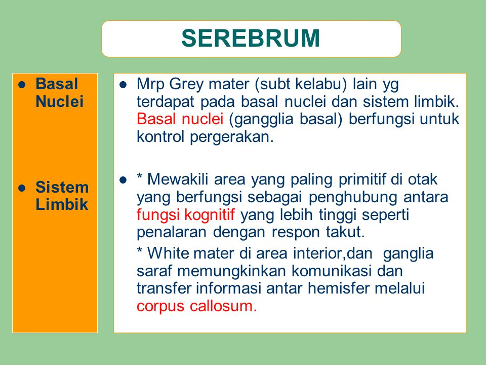 SEREBRUM Basal Nuclei Sistem Limbik Mrp Grey mater (subt kelabu) lain yg terdapat pada basal nuclei dan sistem limbik. Basal nuclei (gangglia basal) b