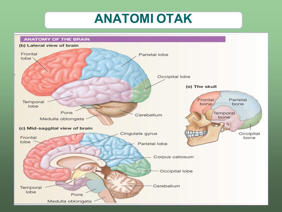 Hubungan satu sel saraf (neuron) dengan sel saraf lainnya.