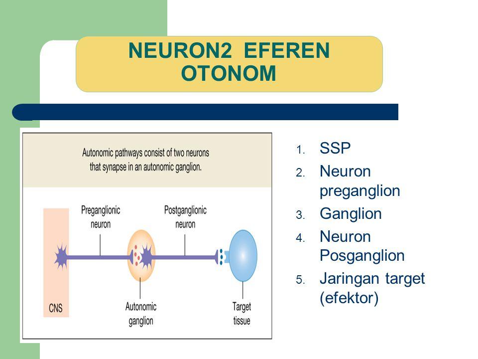NEURON2 EFEREN OTONOM 1. SSP 2. Neuron preganglion 3. Ganglion 4. Neuron Posganglion 5. Jaringan target (efektor)