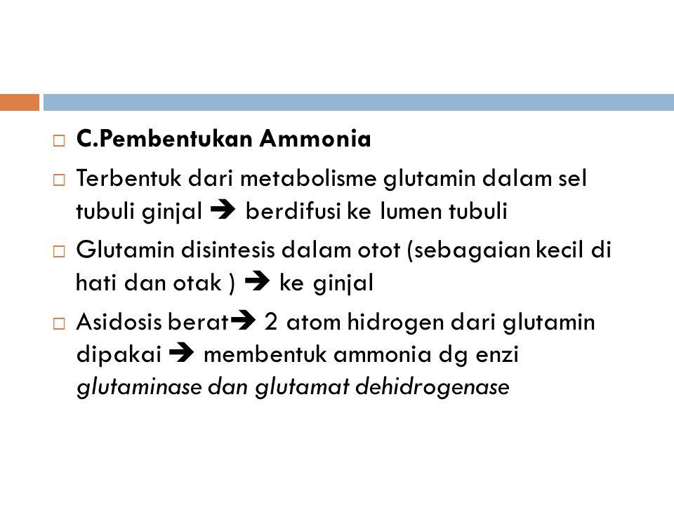  C.Pembentukan Ammonia  Terbentuk dari metabolisme glutamin dalam sel tubuli ginjal  berdifusi ke lumen tubuli  Glutamin disintesis dalam otot (se