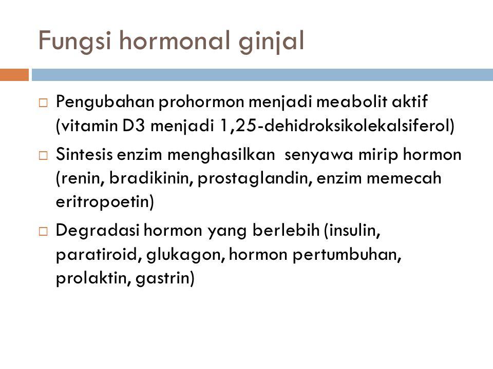 Fungsi hormonal ginjal  Pengubahan prohormon menjadi meabolit aktif (vitamin D3 menjadi 1,25-dehidroksikolekalsiferol)  Sintesis enzim menghasilkan