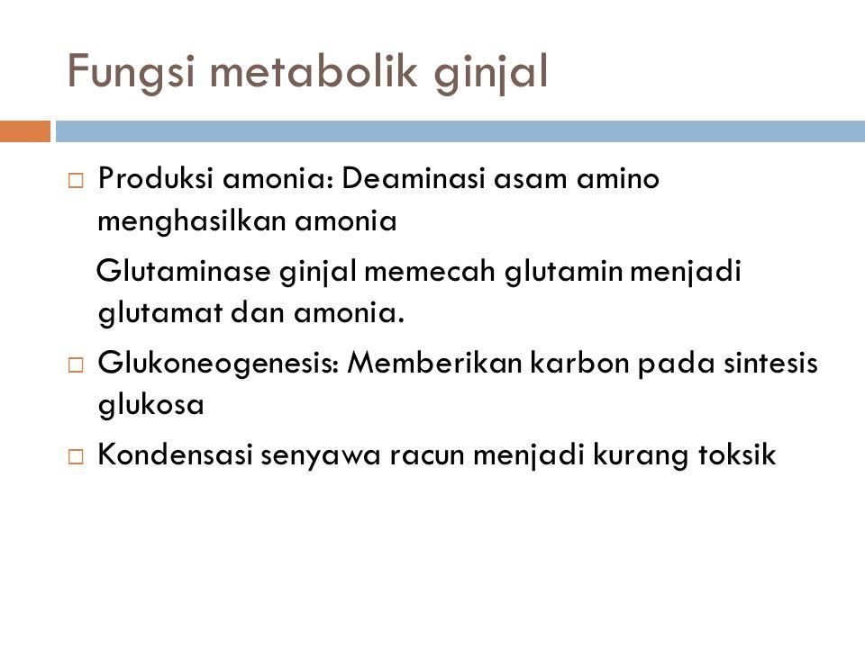 Fungsi metabolik ginjal  Produksi amonia: Deaminasi asam amino menghasilkan amonia Glutaminase ginjal memecah glutamin menjadi glutamat dan amonia. 
