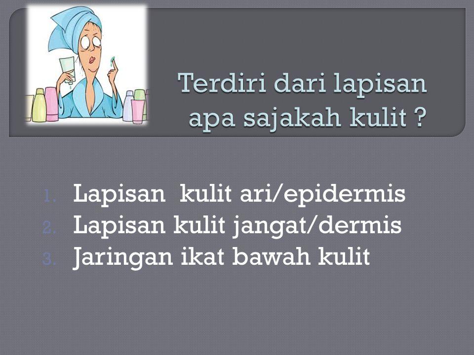 1. Lapisan kulit ari/epidermis 2. Lapisan kulit jangat/dermis 3. Jaringan ikat bawah kulit