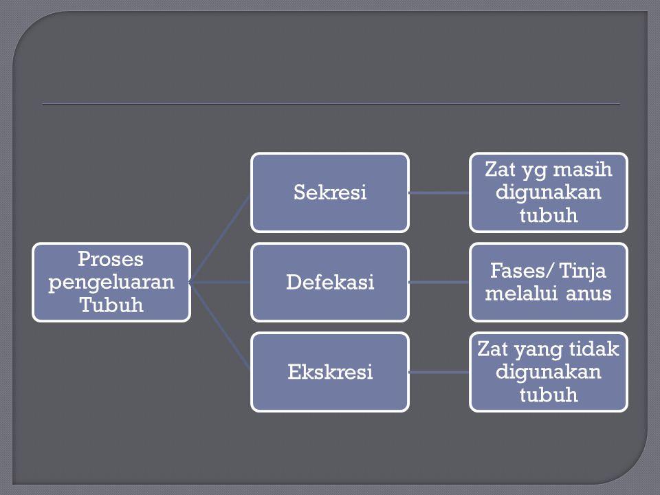 Proses pengeluaran Tubuh Sekresi Zat yg masih digunakan tubuh Defekasi Fases/ Tinja melalui anus Ekskresi Zat yang tidak digunakan tubuh