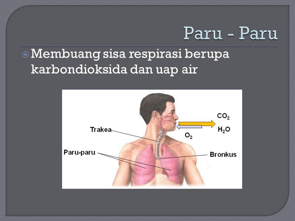  Membuang sisa respirasi berupa karbondioksida dan uap air