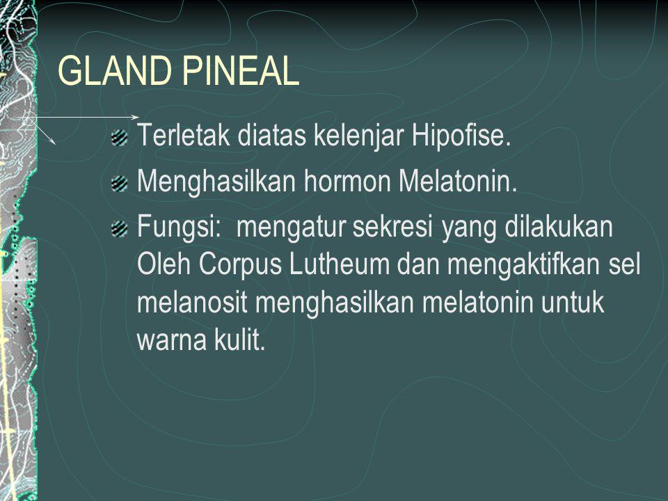 GLAND THYROID Terletak di leher bagian depan, di samping kiri dan kanan trakea.