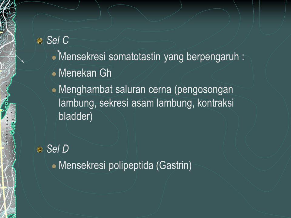 Sel C Mensekresi somatotastin yang berpengaruh : Menekan Gh Menghambat saluran cerna (pengosongan lambung, sekresi asam lambung, kontraksi bladder) Sel D Mensekresi polipeptida (Gastrin)