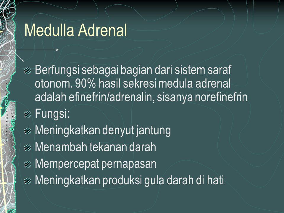 Medulla Adrenal Berfungsi sebagai bagian dari sistem saraf otonom.