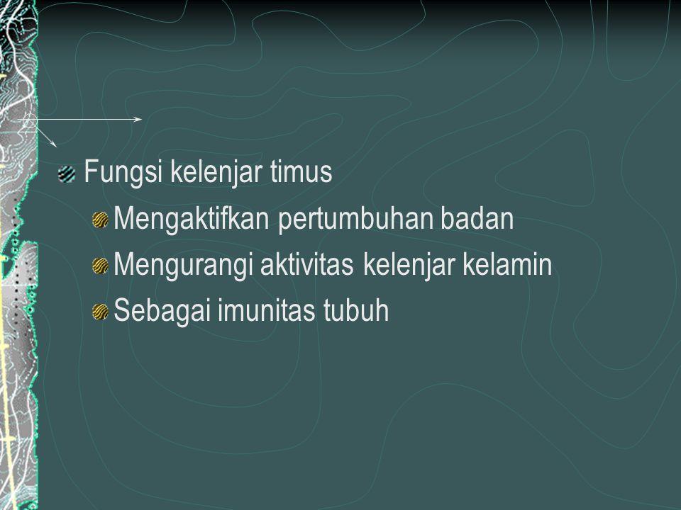 Kelenjar Testis Kelenjar Testis terletak di bagian interstitial testis.