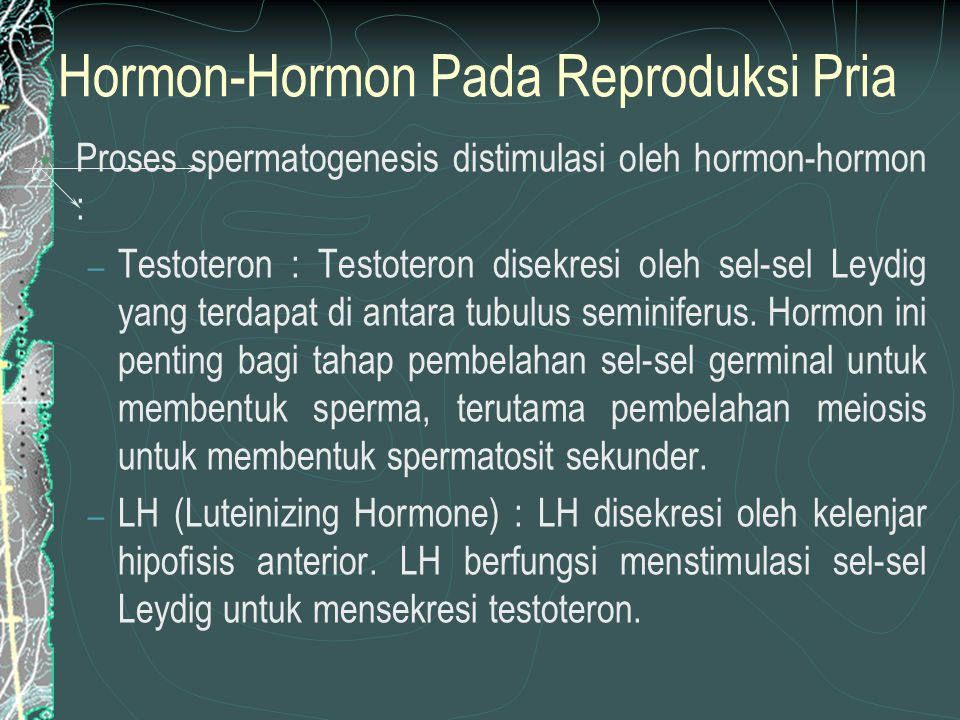 Hormon-Hormon Pada Reproduksi Pria Proses spermatogenesis distimulasi oleh hormon-hormon : – Testoteron : Testoteron disekresi oleh sel-sel Leydig yang terdapat di antara tubulus seminiferus.