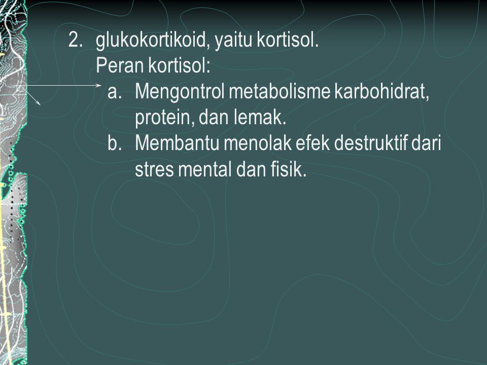 2.glukokortikoid, yaitu kortisol.