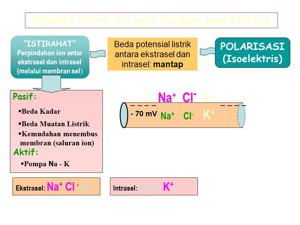 """""""ISTIRAHAT"""" Perpindahan ion antar ekstrasel dan intrasel (melalui membran sel ) Beda potensial listrik antara ekstrasel dan intrasel: mantap POLARISAS"""