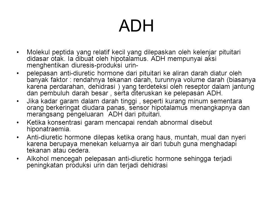 ADH Molekul peptida yang relatif kecil yang dilepaskan oleh kelenjar pituitari didasar otak.