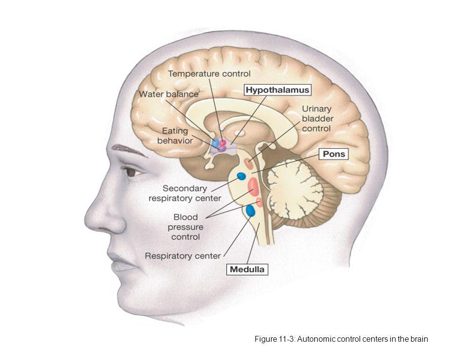 HIPERFUNGSI Hiperfungsi dapat disebabkan oleh: Stimulasi berlebihandari sebuah kelenjar, misal pada penyakit Graves, kelenjar tiroid distimulasi antibodi yang menyerupai hormon Thyroid Stimulating Hormone (TSH); Hiperplasia kelenjar ; Hormon membuat tumor di kelenjar – kadang tumor ektopik menghasilkan hormon Alasan lain disfungsi kelenjar adalah : Tirah baring – membuat Basal Metabolic Rate menurun, proses anabolik juga menurun dan proses katabolik meningkat yang dapat membuat defisiensi protein dan keseimbangan nitrogen negatif.
