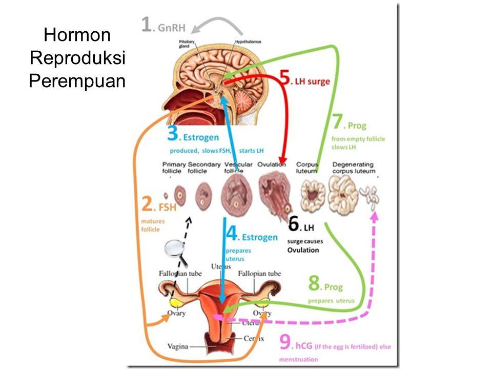 Sekresi Prolaktin ritme sirkadian, konsentrasi plasma prolaktin :tinggi selma masa tidur dan rendah selama masa terjaga pada manusia Dirangsang oleh stimulus menghisap bayi Sekresi juga dipengaruhi suara, olfaksi, dan stres