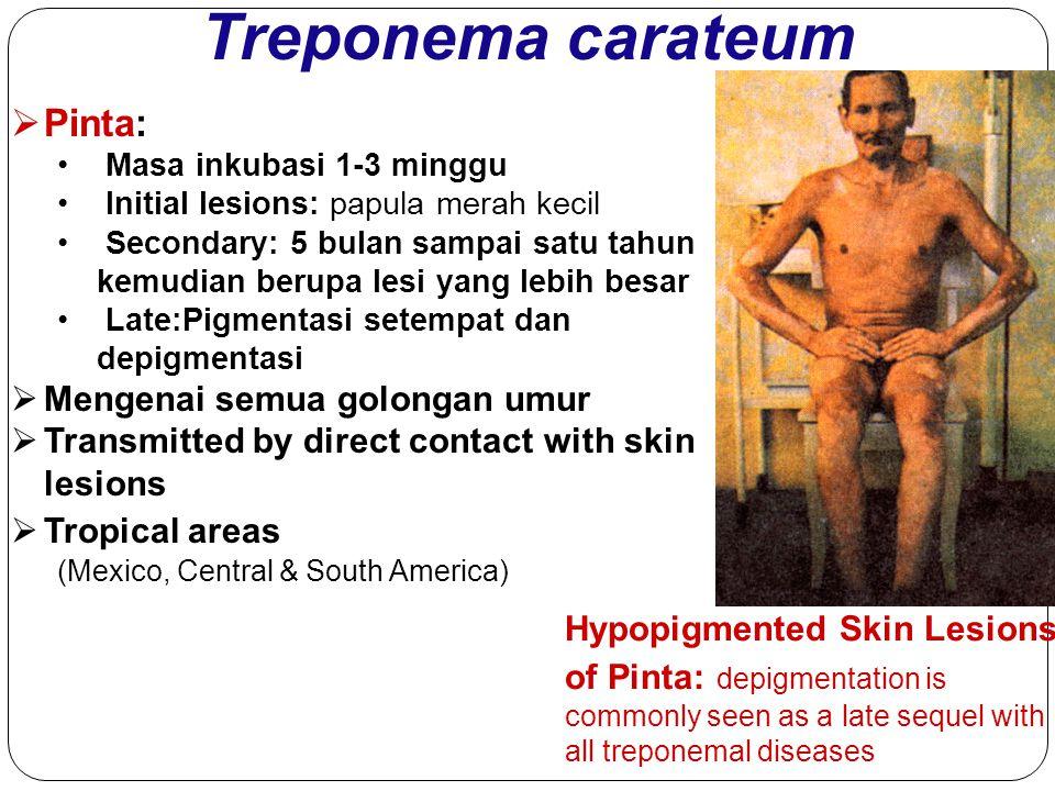 Treponema carateum  Pinta: Masa inkubasi 1-3 minggu Initial lesions: papula merah kecil Secondary: 5 bulan sampai satu tahun kemudian berupa lesi yan
