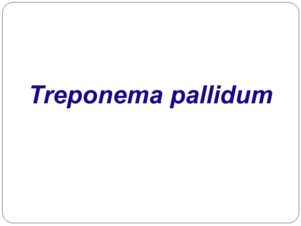 Venereal Treponemal Disease  Syphilis  Primarily sexually transmitted disease (STD)  May be transmitted congenitally
