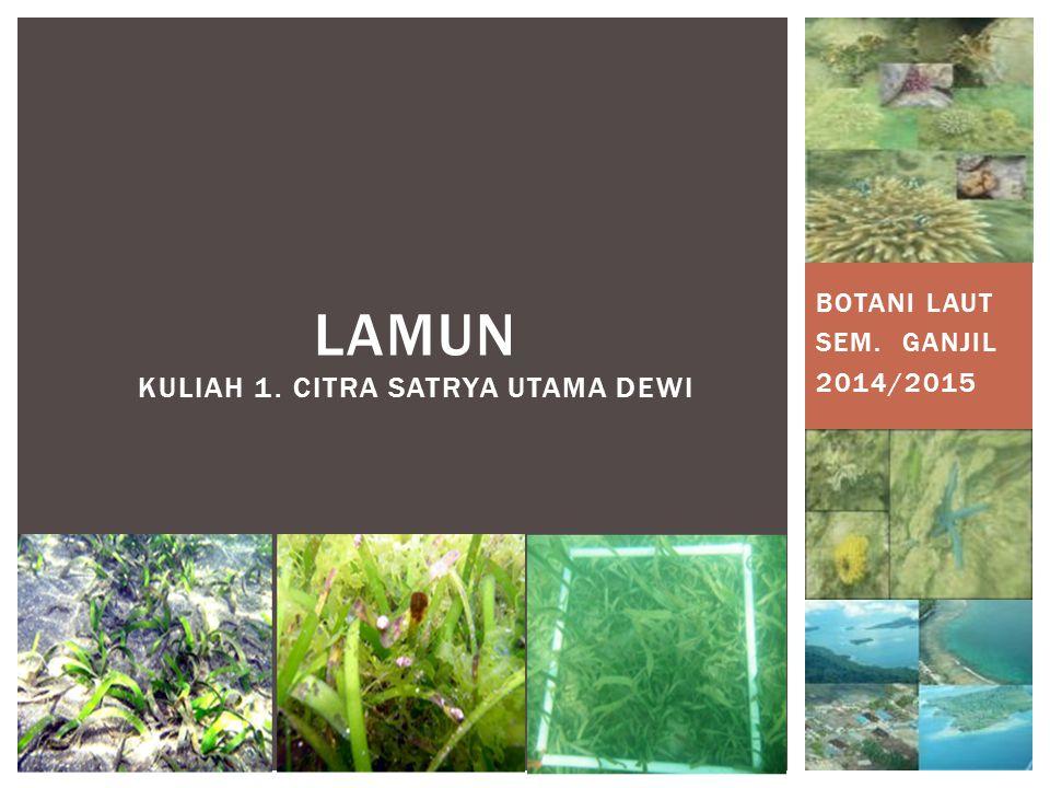 BOTANI LAUT SEM. GANJIL 2014/2015 LAMUN KULIAH 1. CITRA SATRYA UTAMA DEWI
