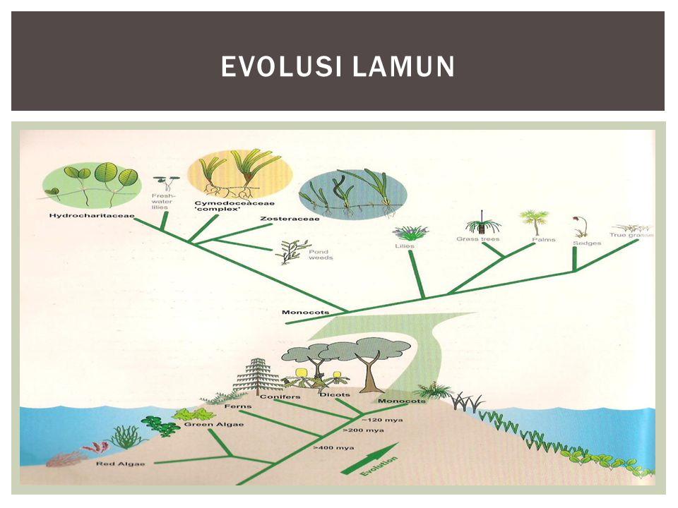 EVOLUSI LAMUN