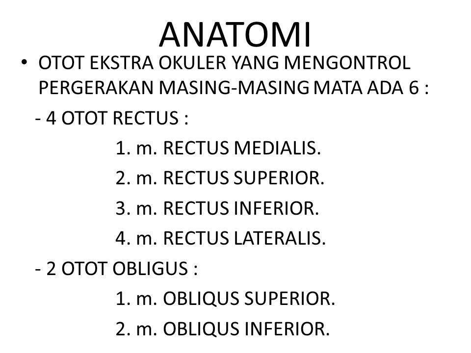 ANATOMI OTOT EKSTRA OKULER YANG MENGONTROL PERGERAKAN MASING-MASING MATA ADA 6 : - 4 OTOT RECTUS : 1.