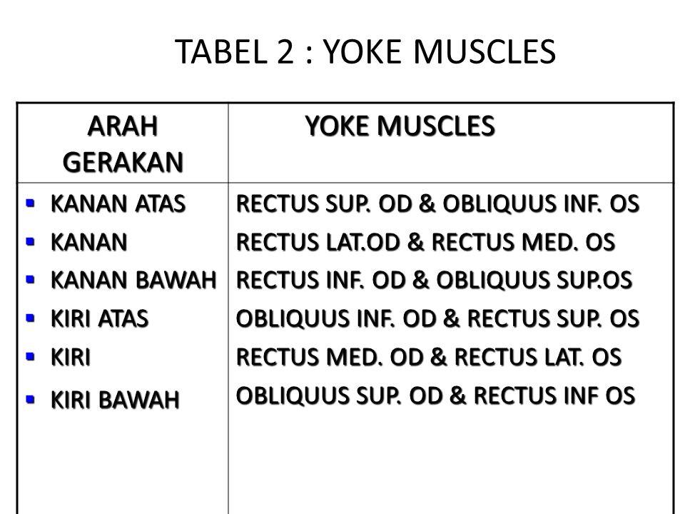 TABEL 2 : YOKE MUSCLES ARAH GERAKAN YOKE MUSCLES YOKE MUSCLES  KANAN ATAS  KANAN  KANAN BAWAH  KIRI ATAS  KIRI  KIRI BAWAH RECTUS SUP.
