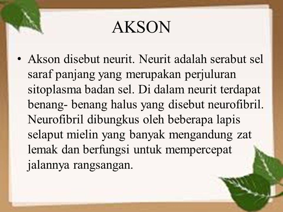 AKSON Akson disebut neurit. Neurit adalah serabut sel saraf panjang yang merupakan perjuluran sitoplasma badan sel. Di dalam neurit terdapat benang- b