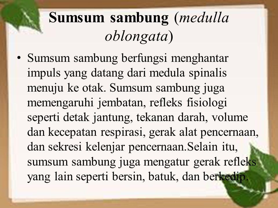 Sumsum sambung (medulla oblongata) Sumsum sambung berfungsi menghantar impuls yang datang dari medula spinalis menuju ke otak. Sumsum sambung juga mem