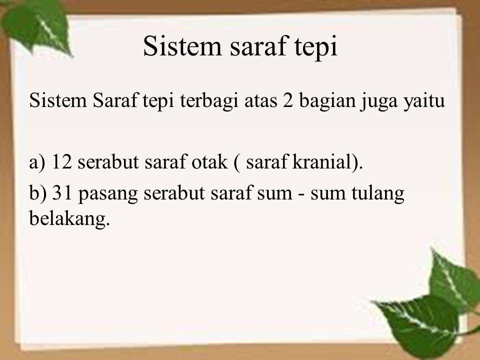 Sistem saraf tepi Sistem Saraf tepi terbagi atas 2 bagian juga yaitu a) 12 serabut saraf otak ( saraf kranial). b) 31 pasang serabut saraf sum - sum t